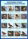 Плакат Зимующие птицы